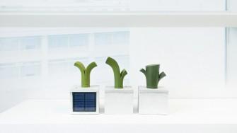 Plant-diary-1