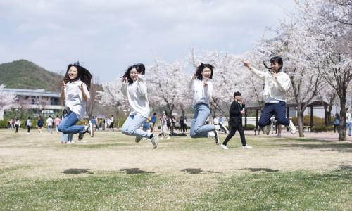 IPD 벚꽃사진_
