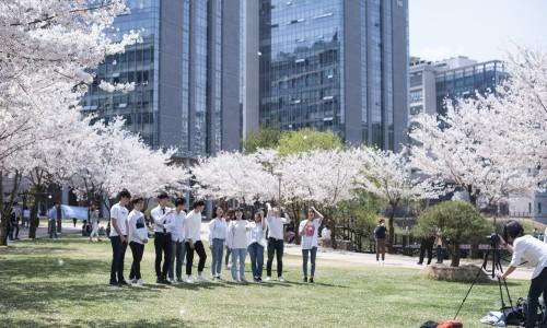 IPD 벚꽃사진_4