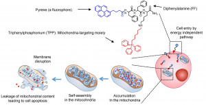 Application of self-assembly peptides targeting the mitochondria as a novel treatment for sorafenib-resistant hepatocellular carcinoma cells