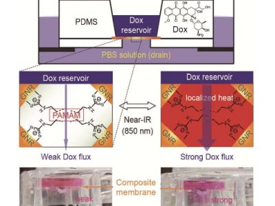 Externally controlled drug release using a gold nanorod contained composite membrane