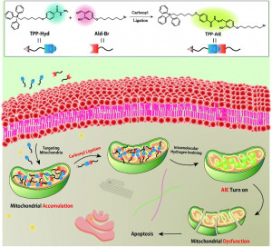 Intra-mitochondrial reaction for cancer cell imaging and anti-cancer therapy by aggregation-induced emission