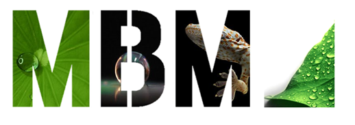 MBM_logo_8